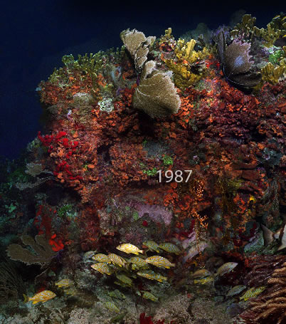 Molassas Reef, Shot 1987. Part of a 15,000 image virtual reef.